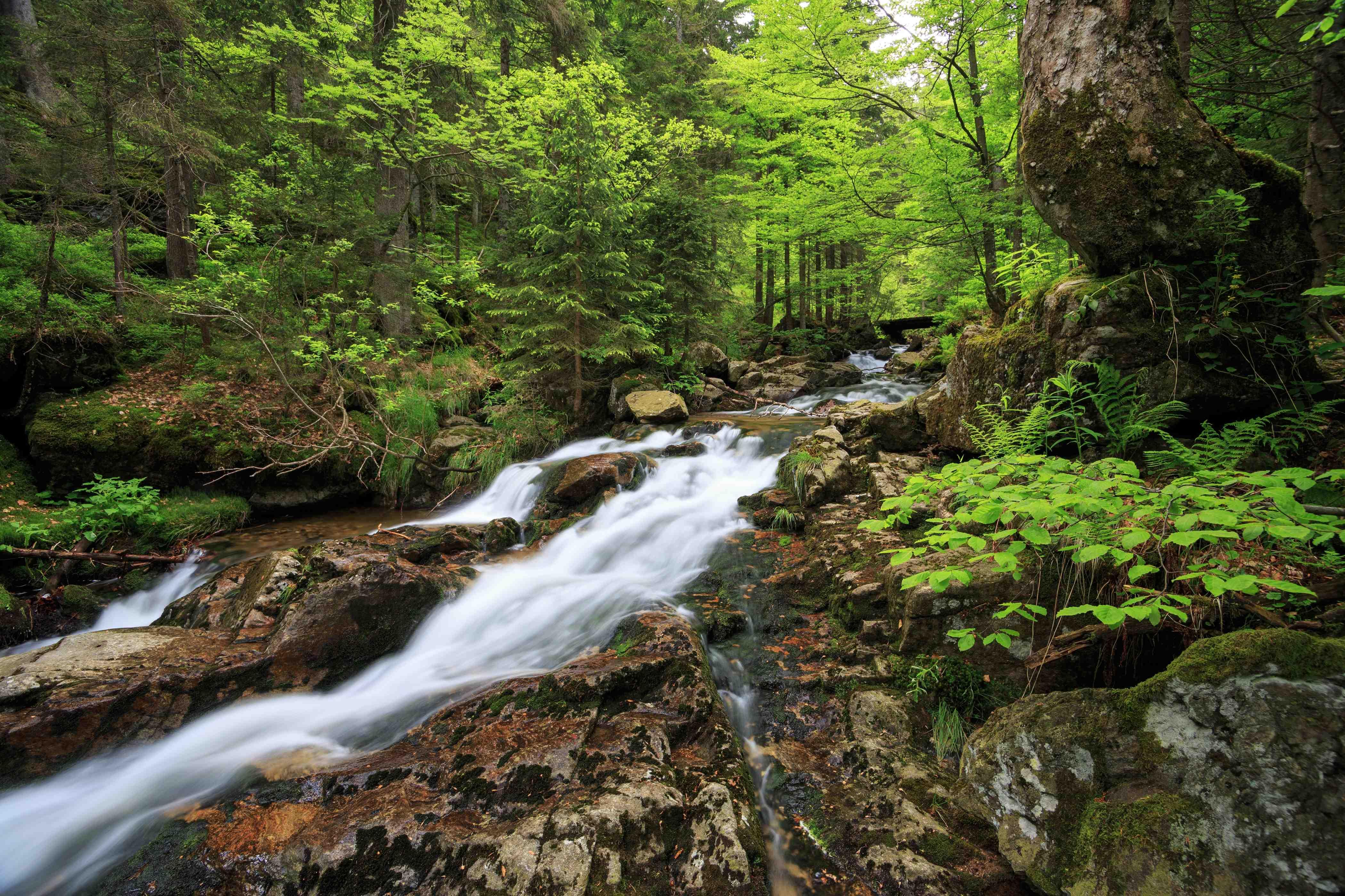 Wasserbild Refugium Lindenwirt Basenkur Meditation